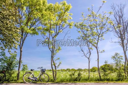 Arboles de primavera con bicicletas