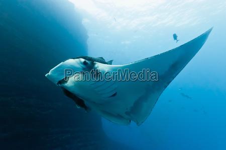 animal pescado submarino rayo de luz