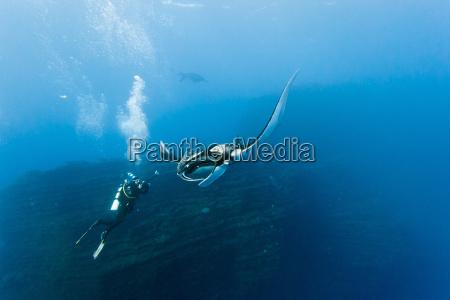 pescado rayo de luz rayo buzo