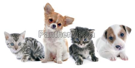 cachorros y gatito