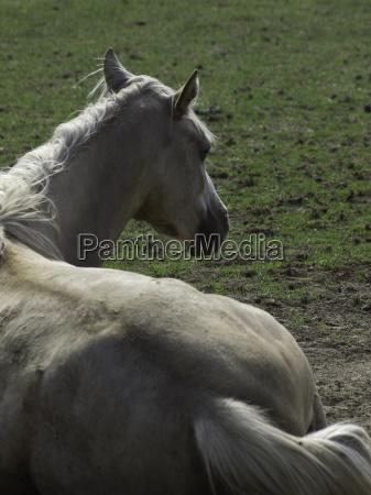 paseo caballo animal yegua montar a