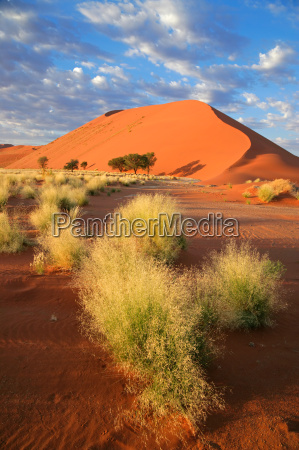 desierto namibia duna paisaje naturaleza prado