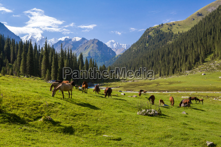 paisaje, de, montaña, con, manada, de - 10016808