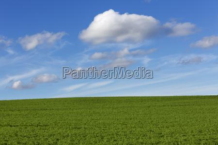prado con el cielo azul de