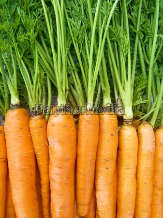 naranja comida salud primer plano jardin