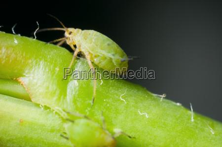macro de una sola mosca verde