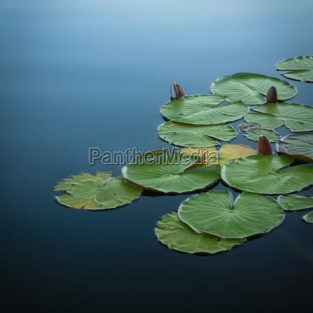frescura tranquilidad capullo superficie resto seerosen