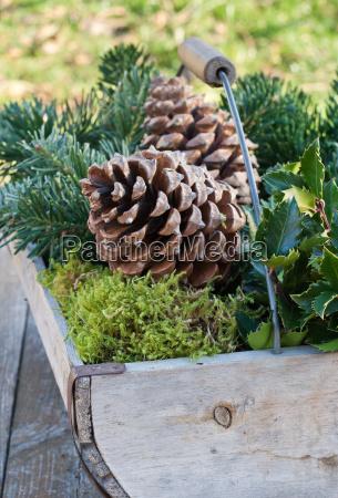 invierno madera ramas canasta rama nueces