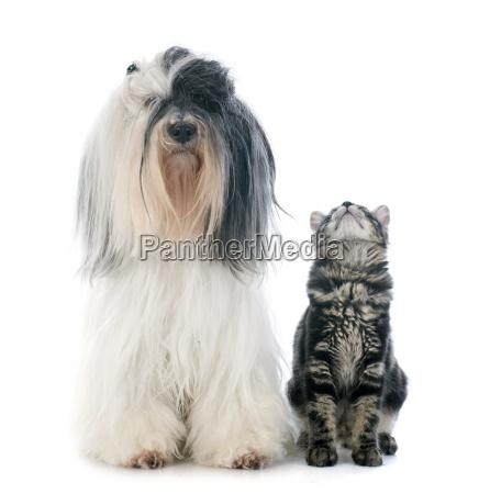 ver perro gato gatito
