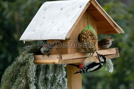 birdhouse con el buntspecht