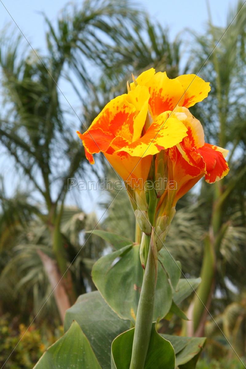 flor, planta, las maravillosas flores, flowerage, florecer, flores - 10820610