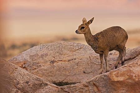 femenino desierto animal parque nacional africa