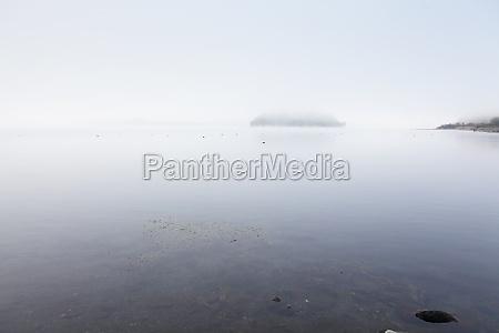 hermoso bueno arbol madera campo niebla