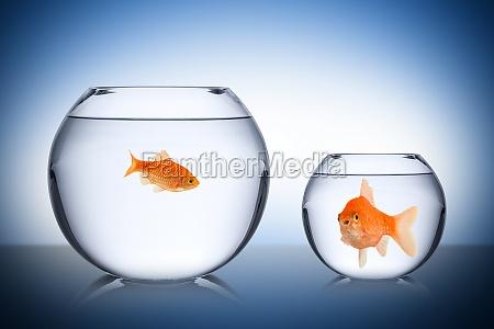 pescados concepto envidia sociales