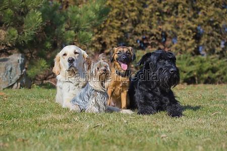 un grupo de cuatro perros de