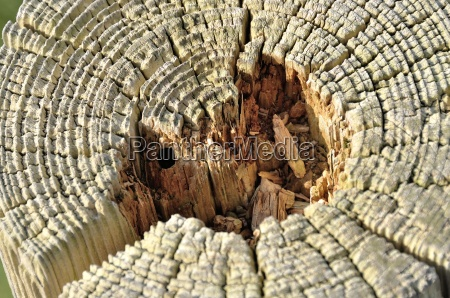 arbol tronco enganchar lenya capa cortical