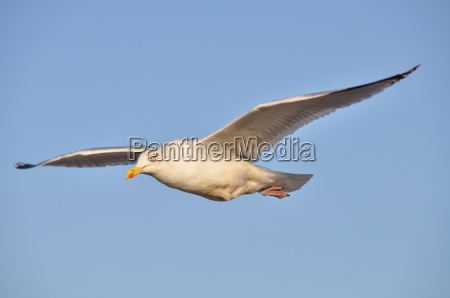 horizonte pajaro aves de agua salada