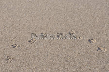 moevenspuren en la arena