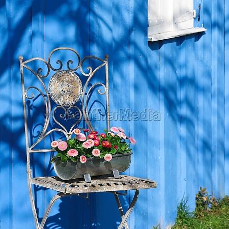 azul jardin ventana madera flor flores