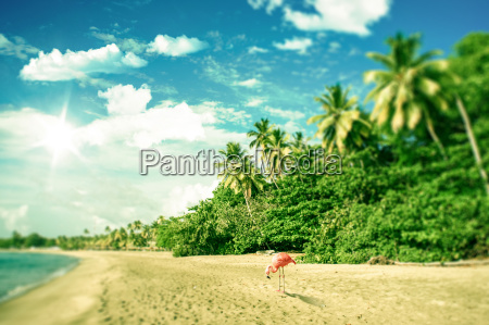 tropical beach with a flamingo looking