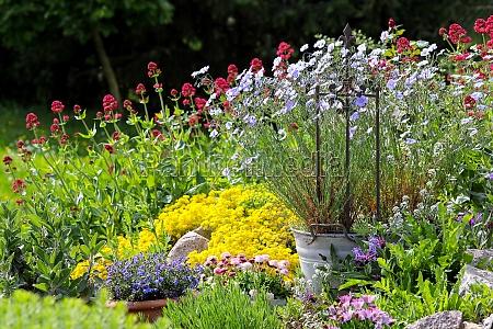 flores de colores en el jardin
