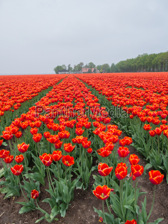 field of fiery red and orange
