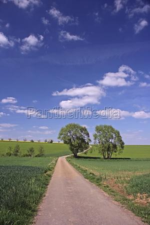 camino de tierra con 2 arboles