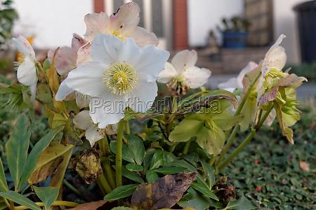 jardin flor planta las maravillosas flores