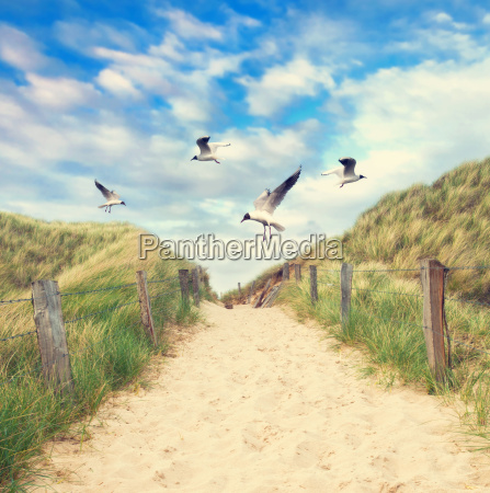 seagulls flying over the beach access