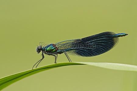 hoja medio ambiente hojas libelula libelulas