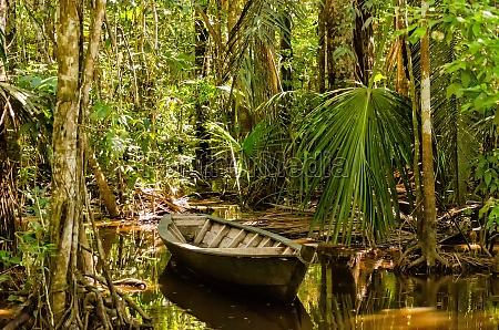barco con remos en la selva