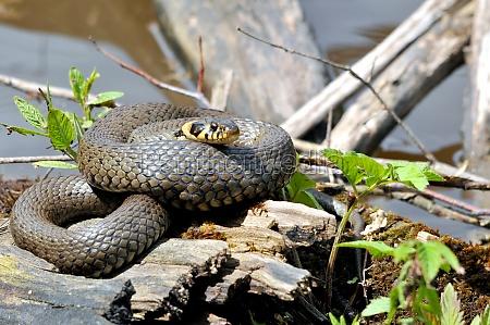animal reptil serpiente mundo animal no