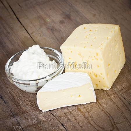 leche queso lacteos producen camembert