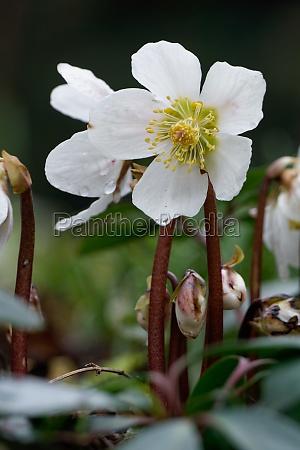 primer plano jardin invierno flores primavera