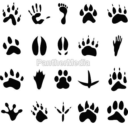coleccion de 20 animales y huellas