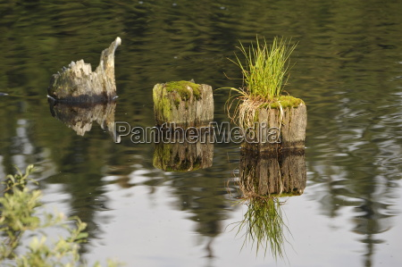 resina misticismo reflexiones de agua dulce