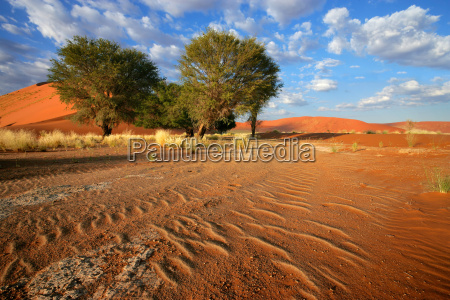 paseo viaje arbol desierto turismo africa