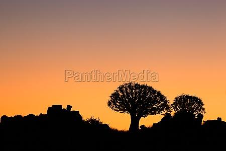 arbol desierto puesta del sol africa