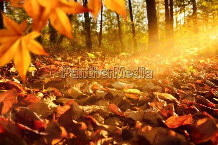 rayos de luz en el suelo