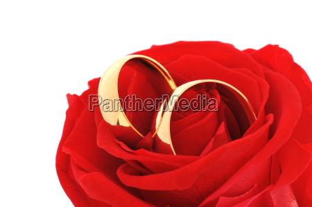 dos anillos con rosa