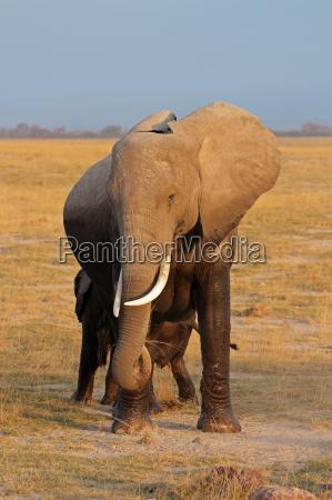 paseo viaje enorme parque animal mamifero