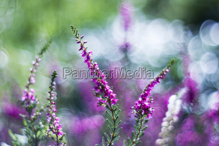 hoja color jardin flor planta purpura