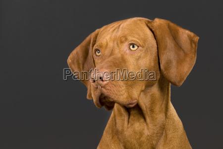 retrato del perro en el fondo