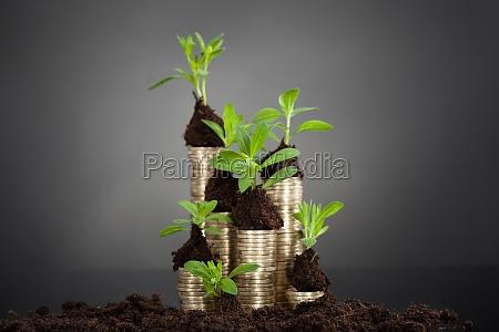 plantones en la pila de monedas