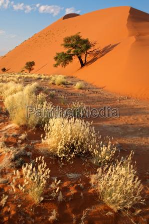 azul paseo viaje arbol desierto turismo
