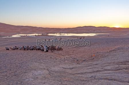 bedouin camp in sahara desert in