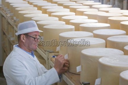 inspector comprobar jovenes ruedas de queso
