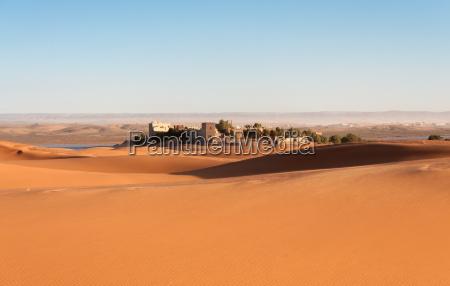 oasis in the sahara desert morocco