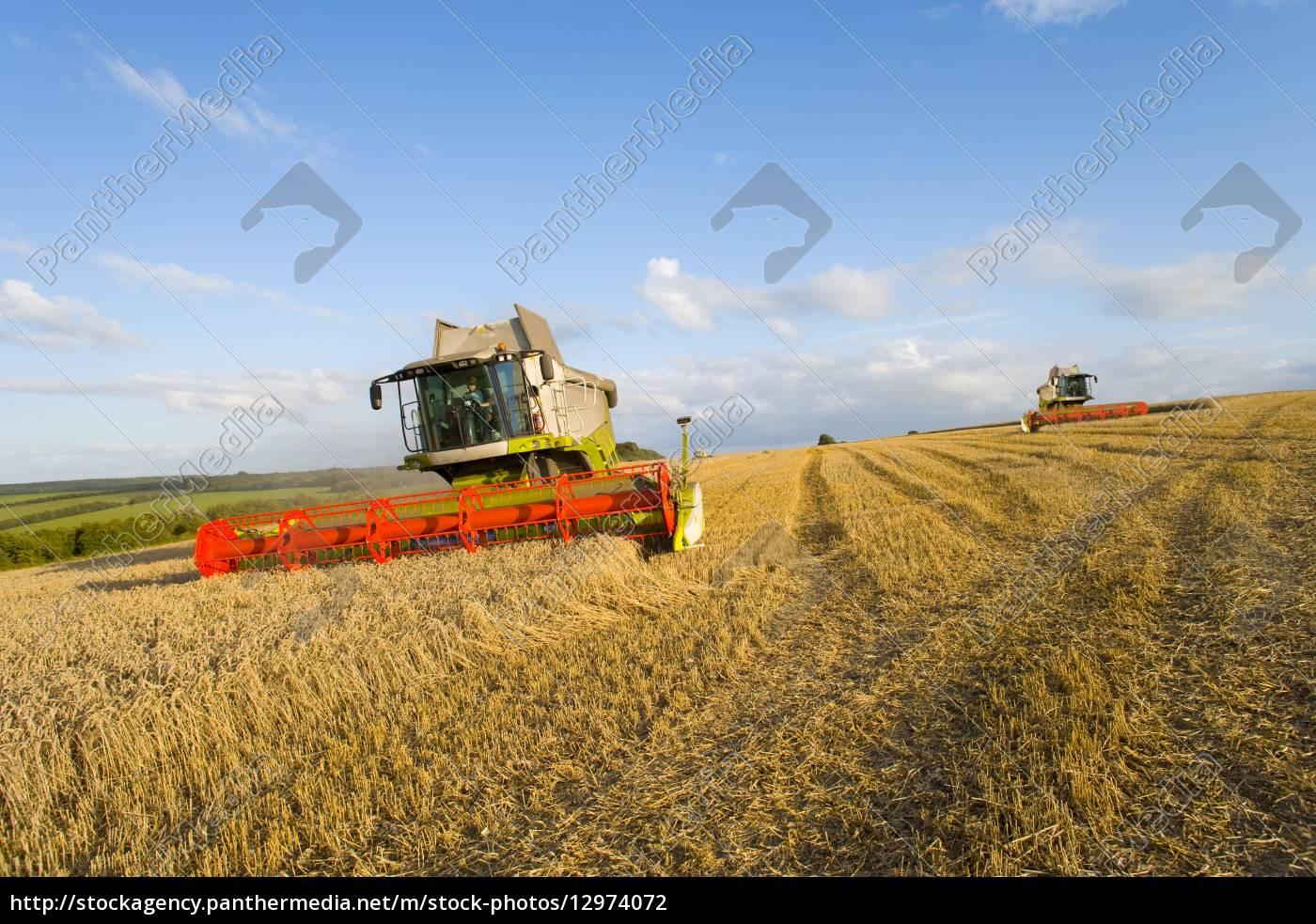 trigo, de, la, cosecha, en, el - 12974072
