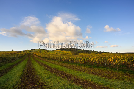landscape with vineyards and clouds